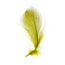 Wapsi Mallard Barred Flank Feathers